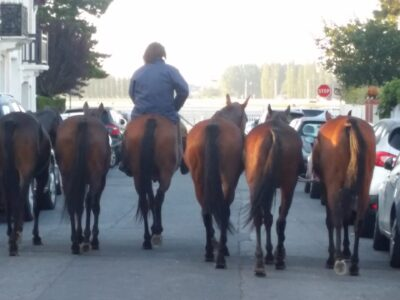 Horses on their way to the beach in Deauville