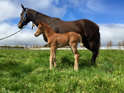 Arqana purchase Snow Bell (FR) with her Zoustar colt