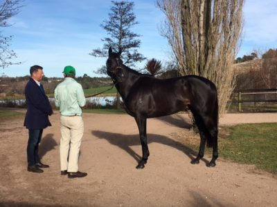 Inspecting stallion purchase Alpine Eagle