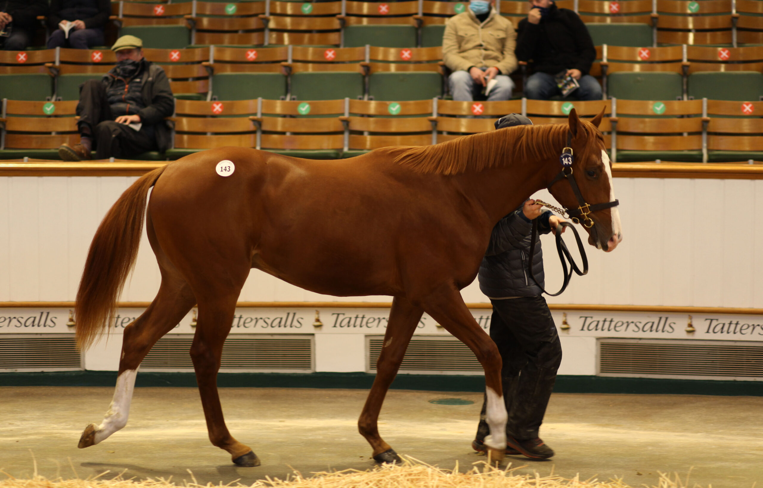 Pagan enlists the assistance of Belmont Bloodstock in first European Yearling Purchase